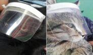 Crean caretas para gatitos en municipio de Veracruz y causa sensación en redes
